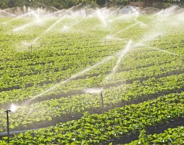 Agricultural insurance - Slider EN AGRI IMM 1-50M